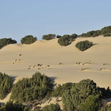 Piscinas, dunes (photo Ivo Piras)