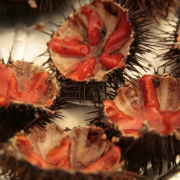 Sea urchin fair